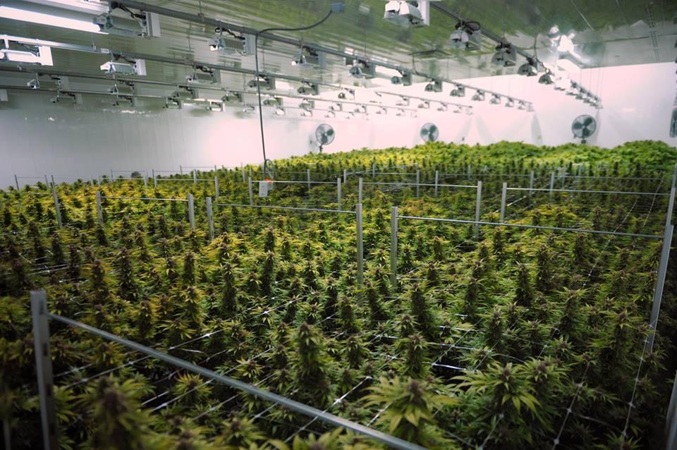 photo: canopy growth corporation via facebook