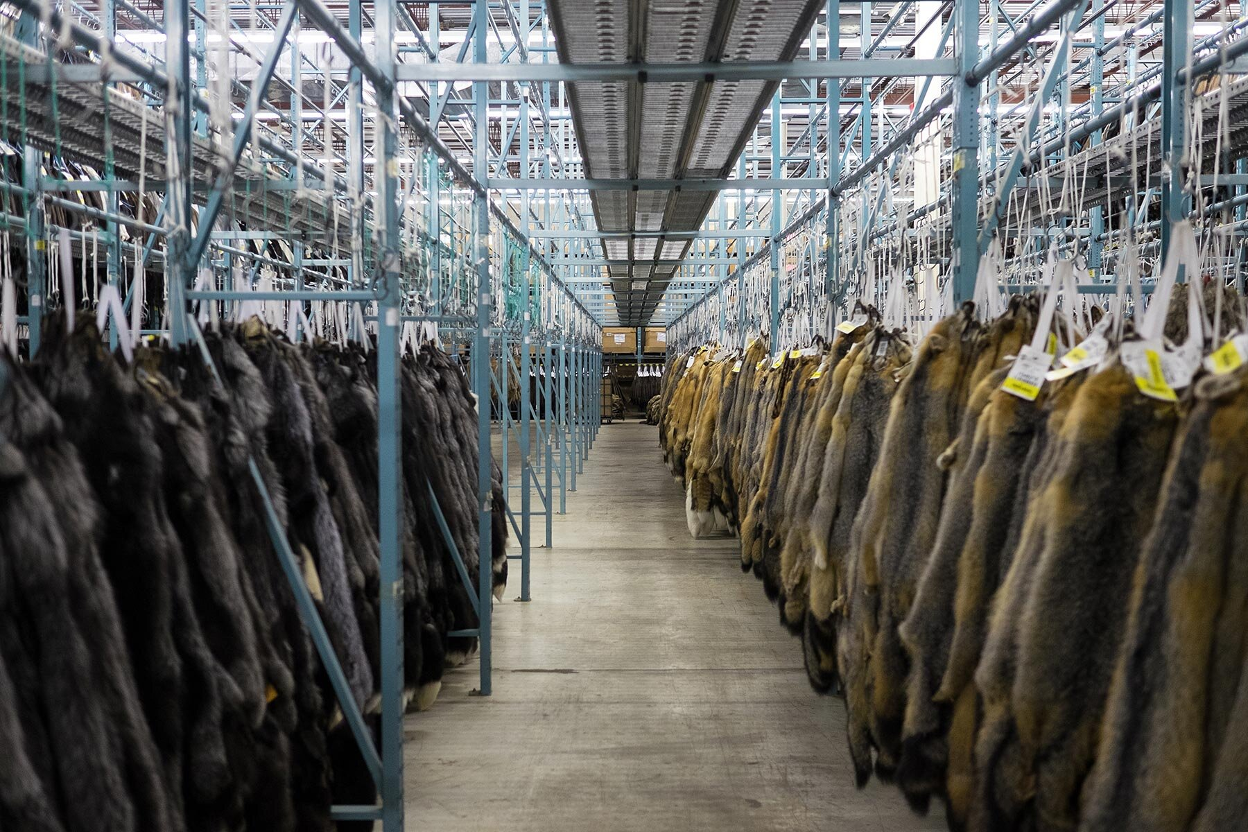 photo: al jazeera (inside a canadian fur auction)