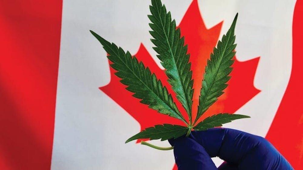 Pot-Leaf-CanadaFlag.jpg