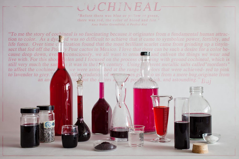 Cochineal-89bb.jpg