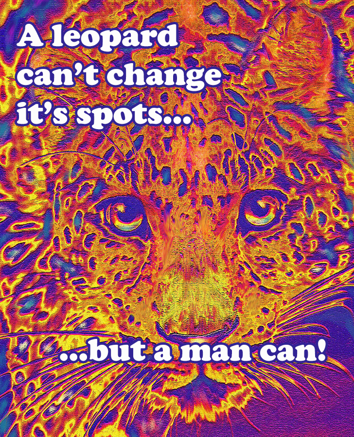 leopard-eyes-orange-jane-schnetlage copy.jpg