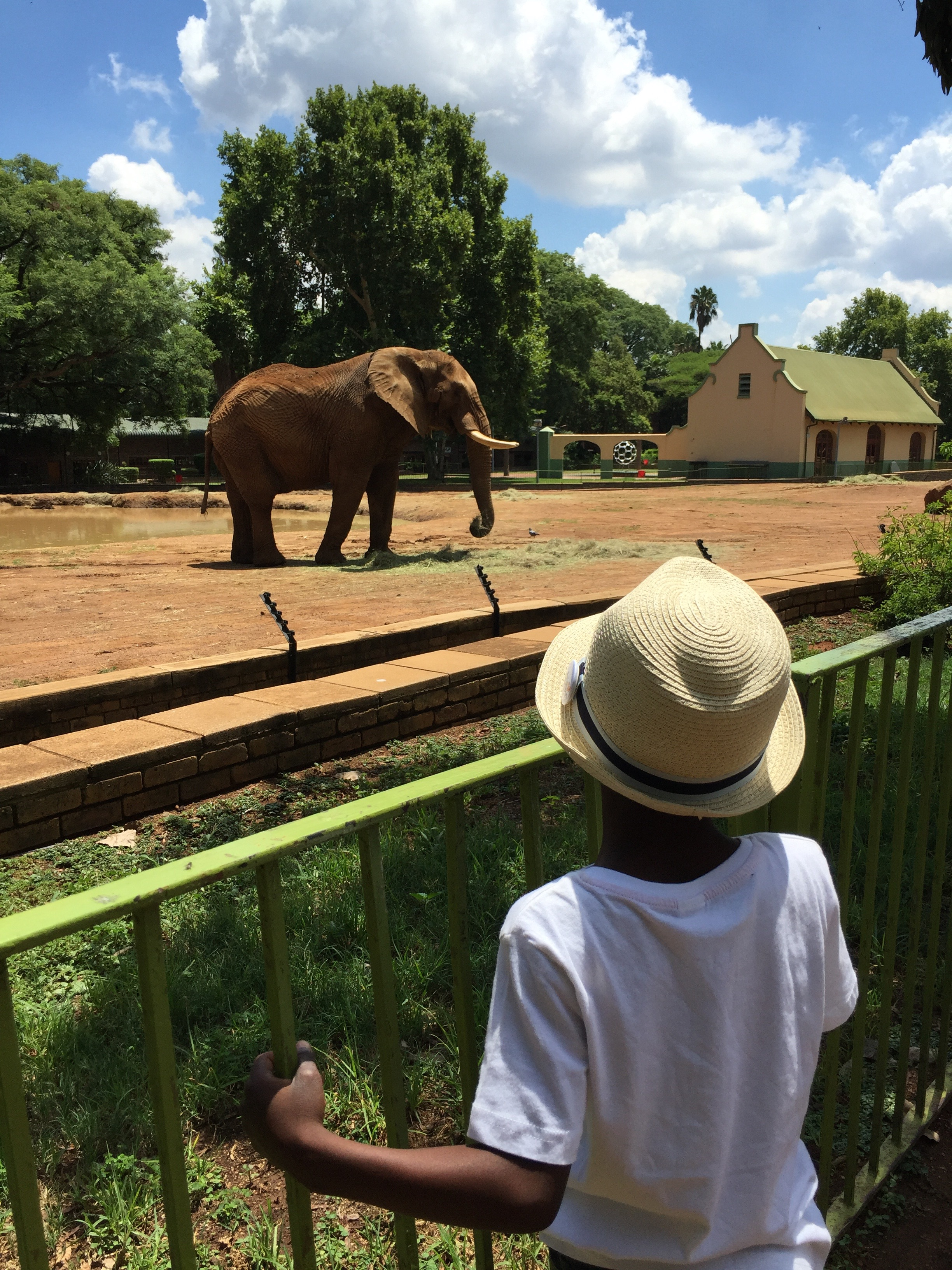 T and an elephant.