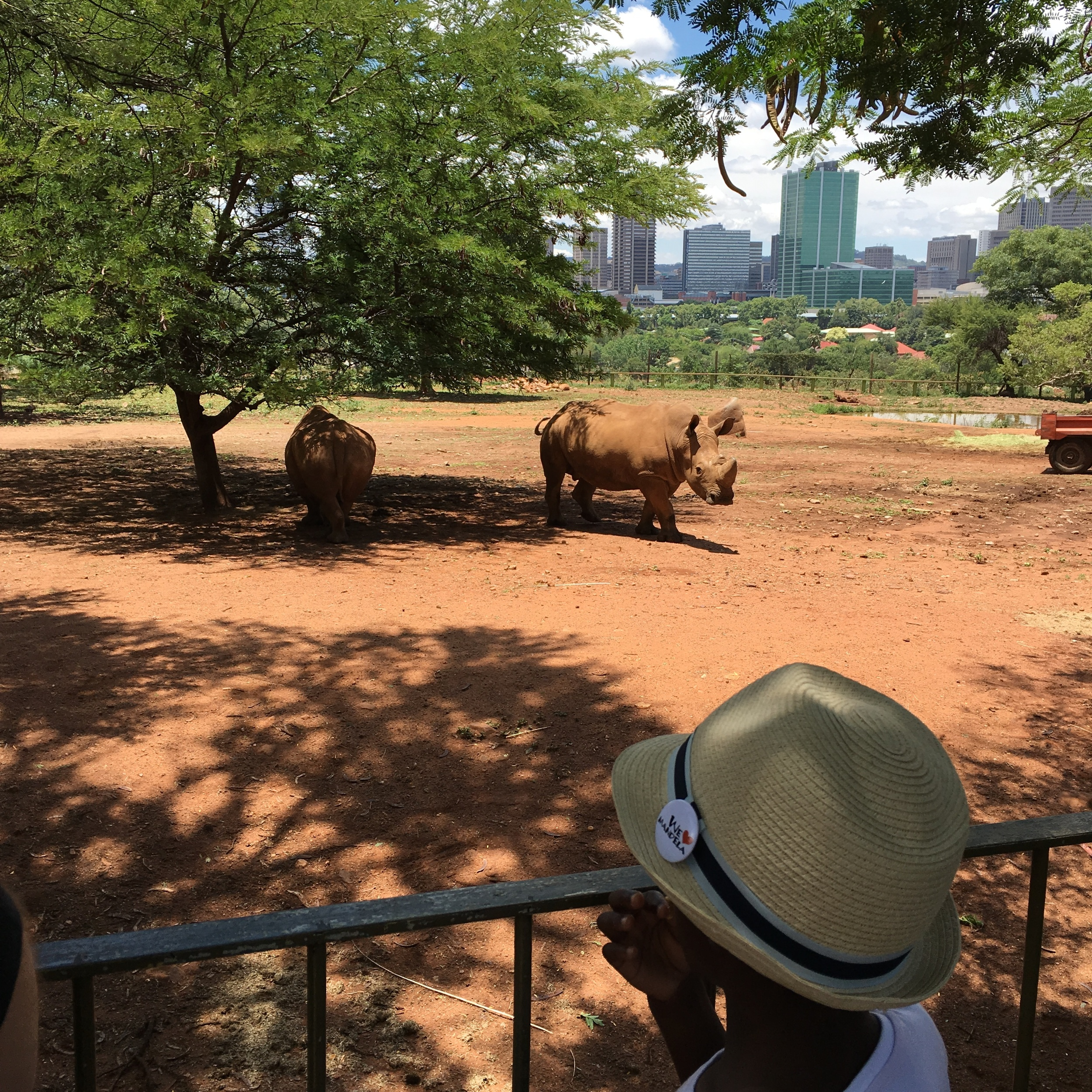 T and the rhinos with downtown Pretoria in the background.