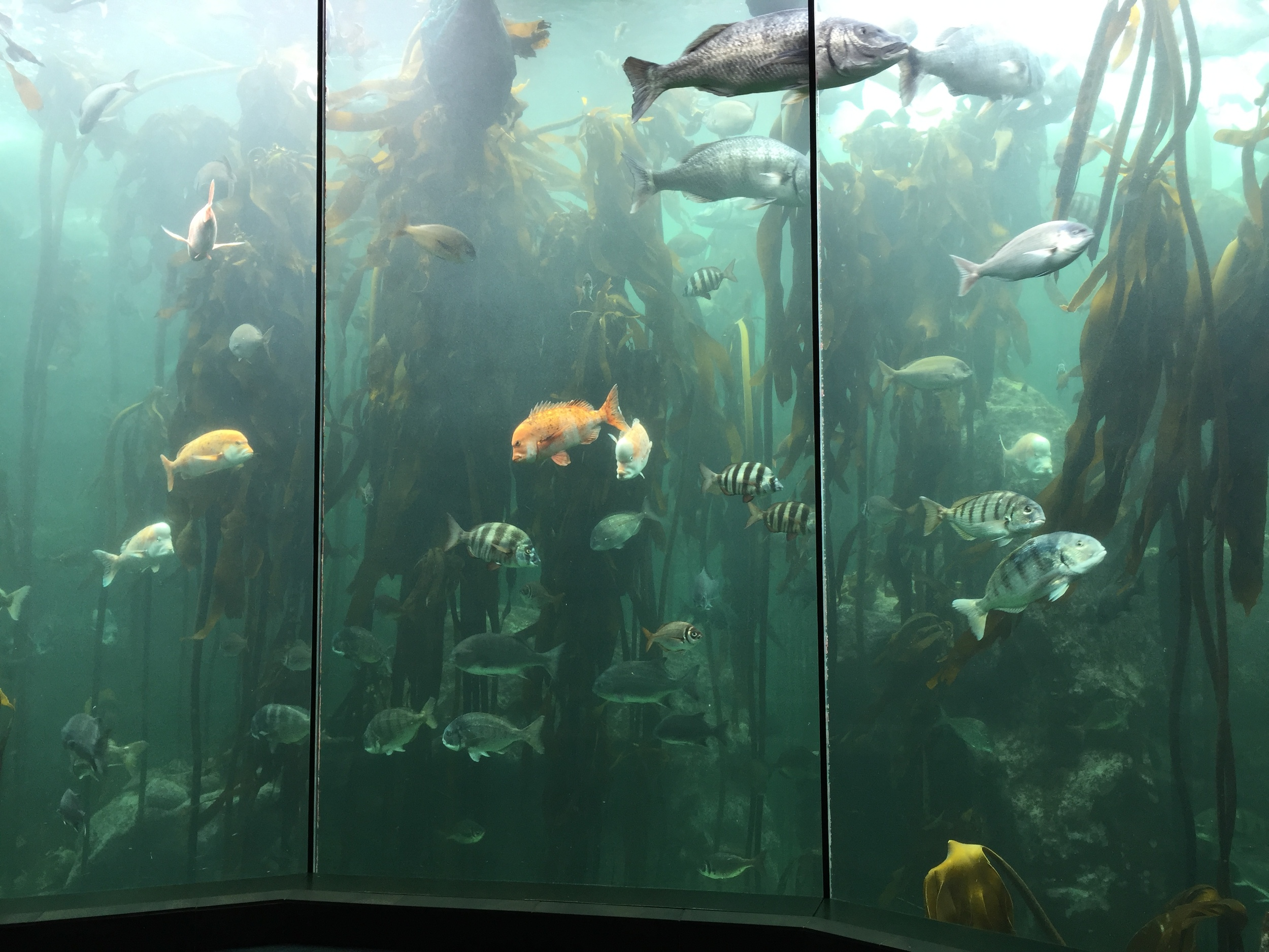 Sea kelp forest.