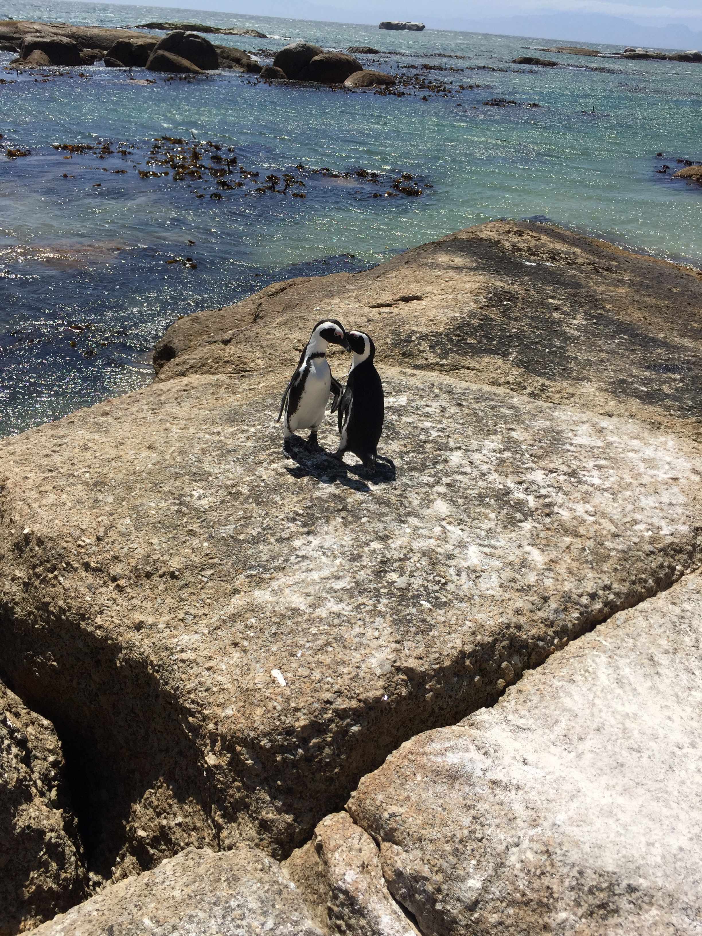 Two penguins were dancing around together. It was adorable.