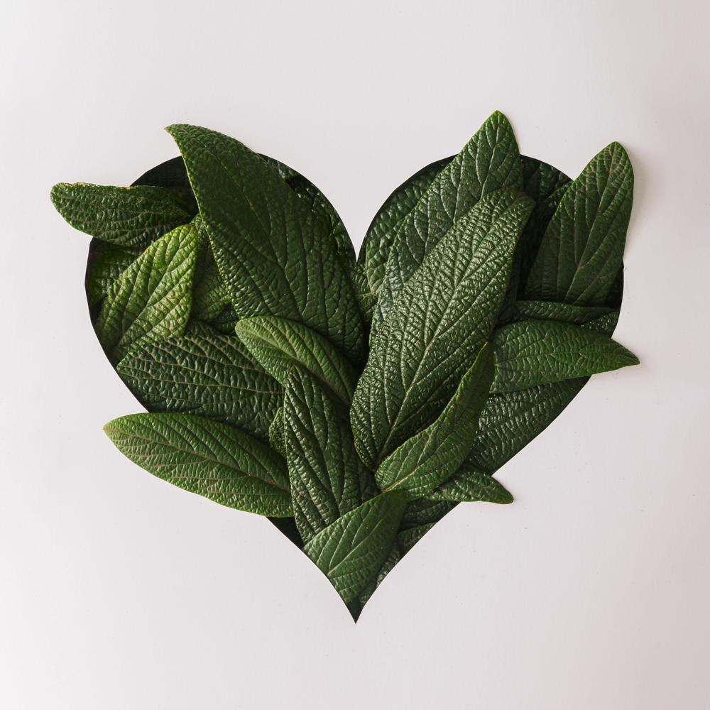 corazon-Hojita.jpg