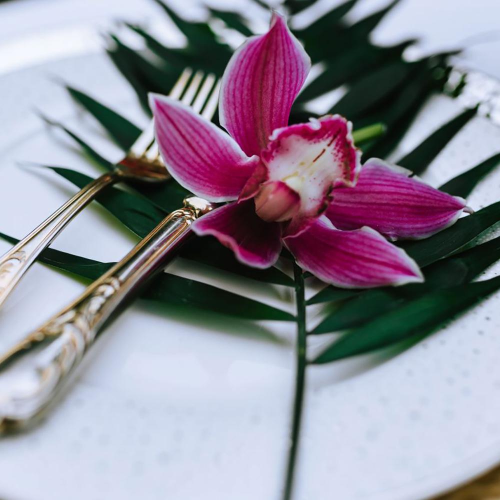 kaboompics_Cymbidium,-boat-orchid.jpg