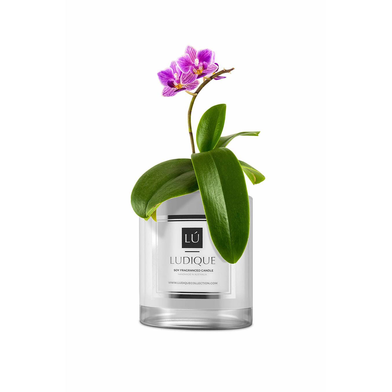 IDEAS_orchid_maison.jpg