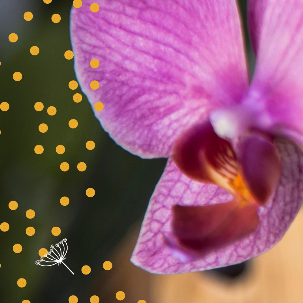 FULL-INSTAGRAM_orchid.jpg