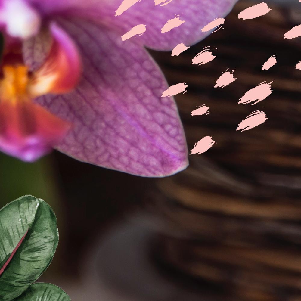 FULL-INSTAGRAM_orchid03.jpg