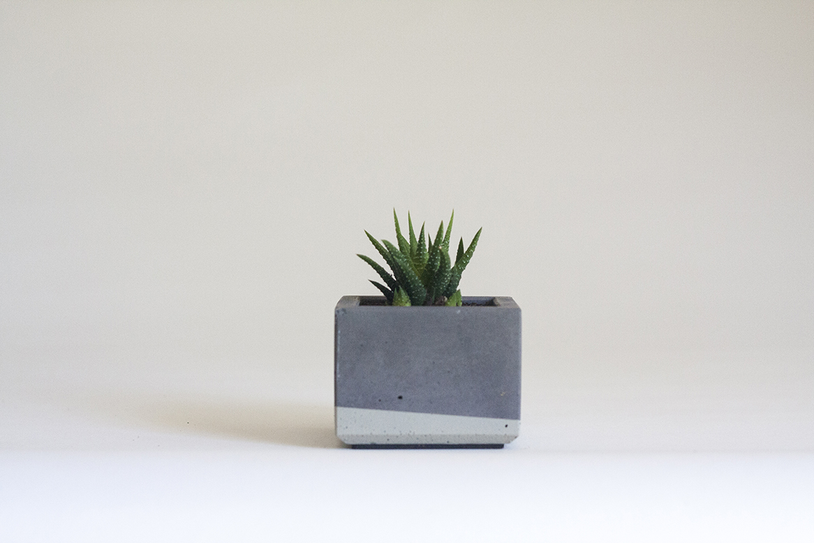 Zebra haworthia in our Mini Concrete Planter, Charcoal Grey and Grey