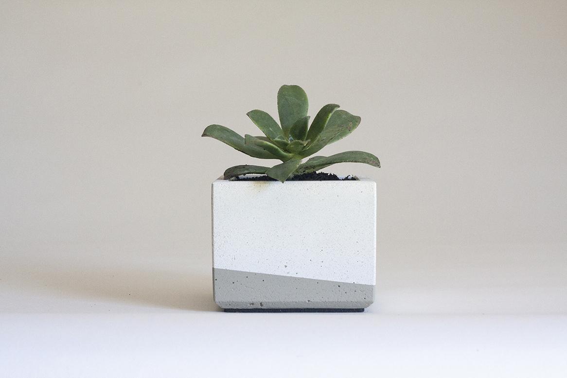 Aeonium kiwi  in our Small Concrete Planter, White and Grey