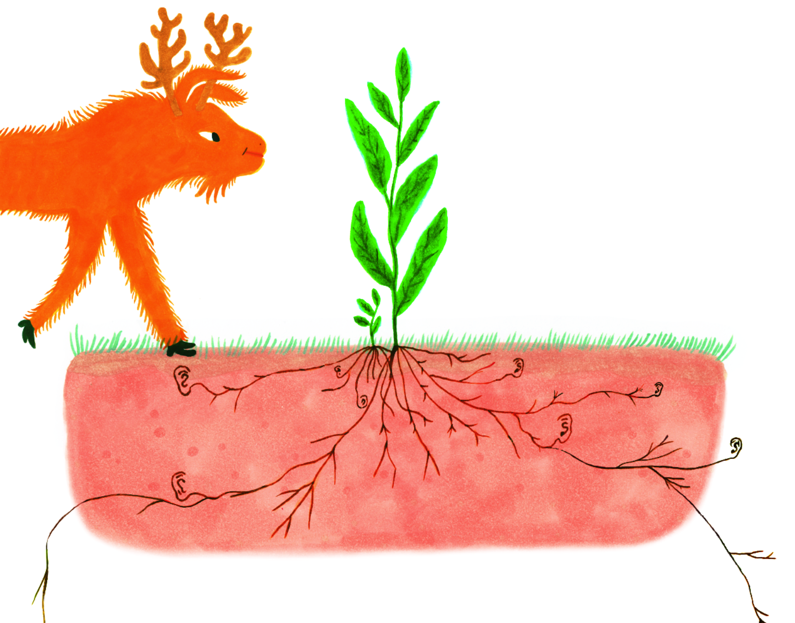 Växternas hemliga liv