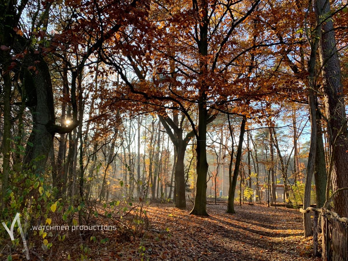 landscapes28.jpg