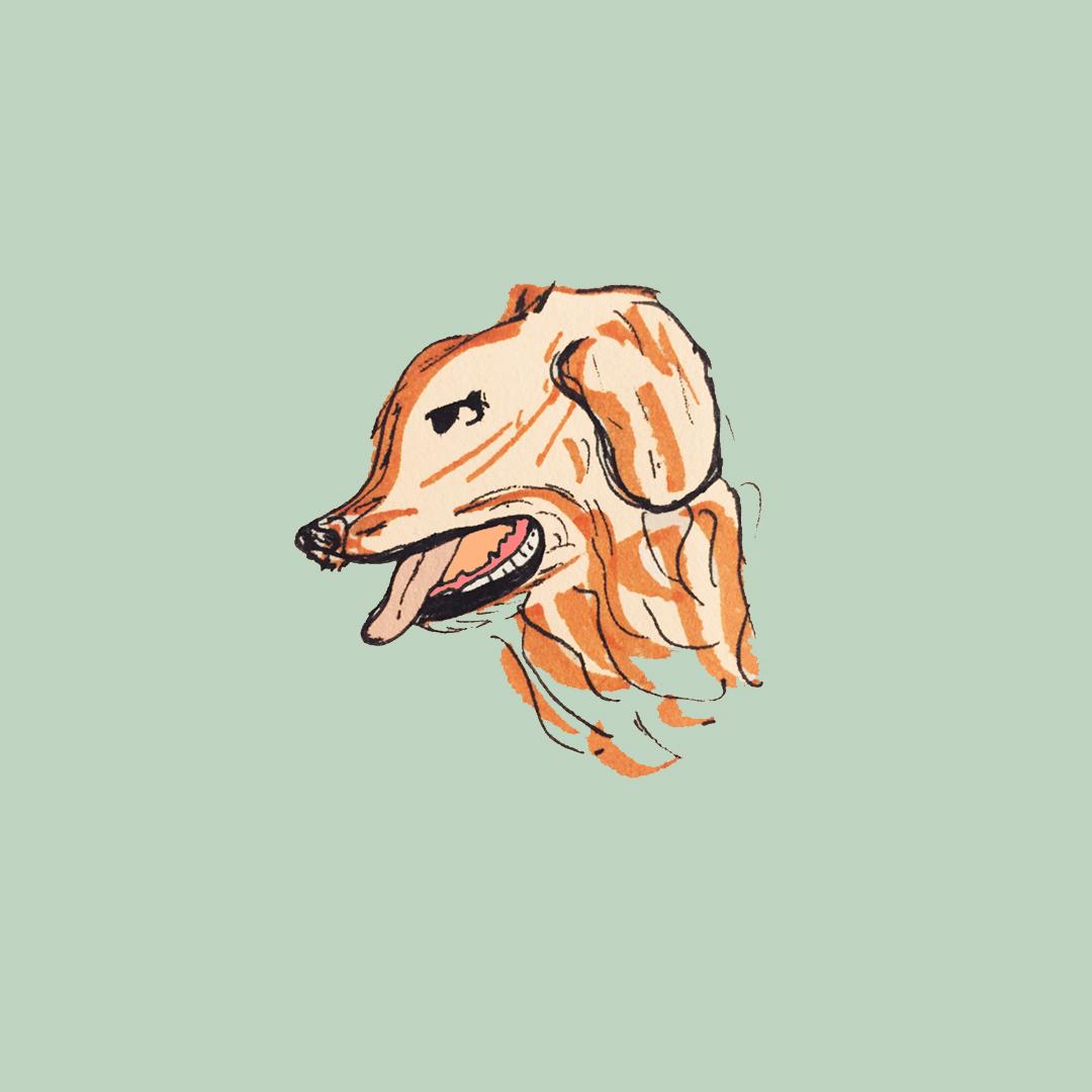 dog_ameliagoss