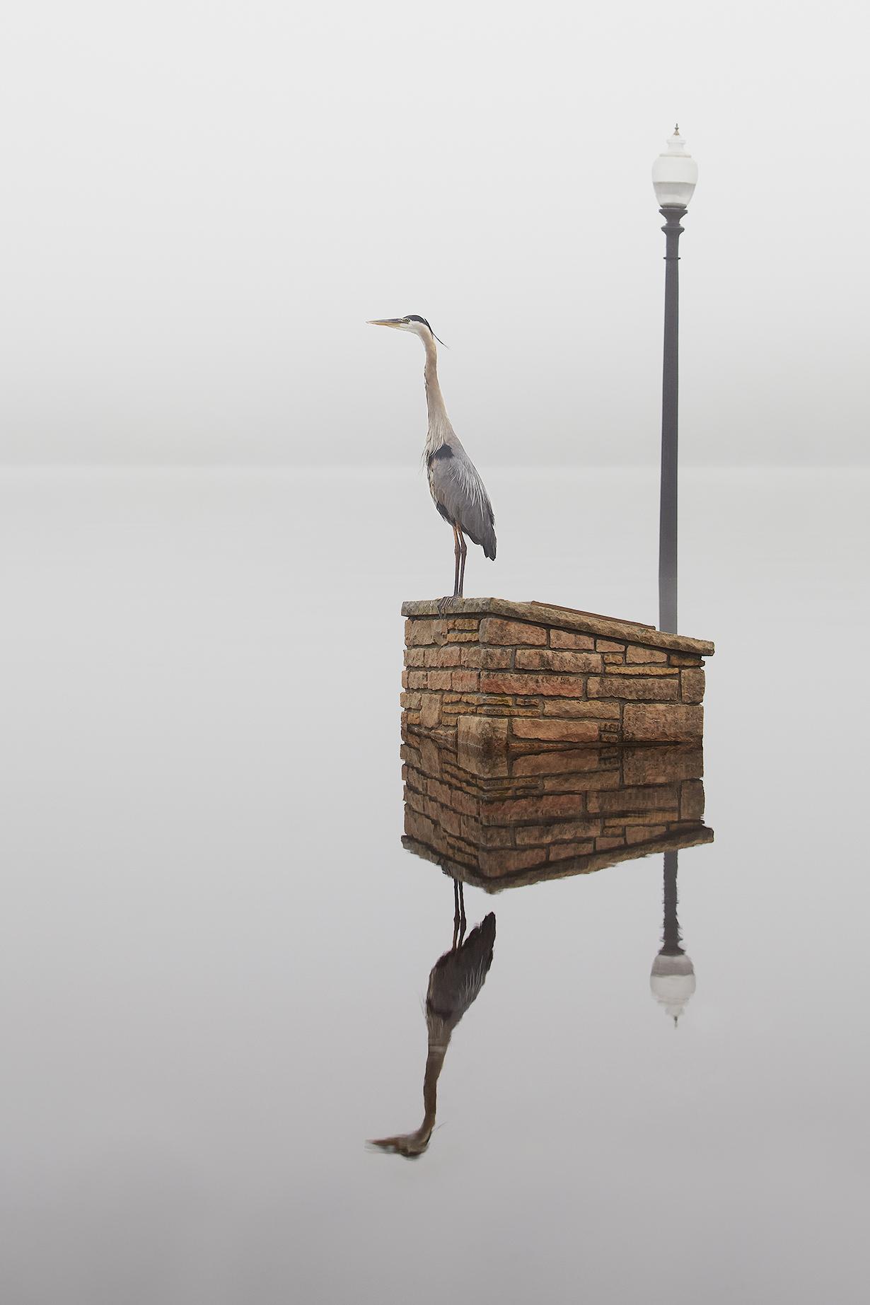Stillwater Heron_4x6.jpg
