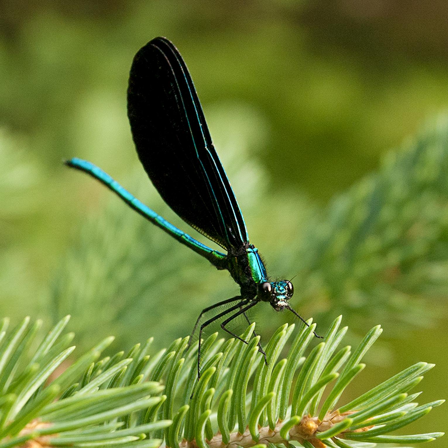 dragonfly_5x5.jpg
