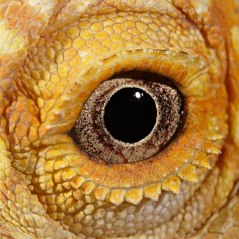 Eye of Nybaas_5x5.jpg