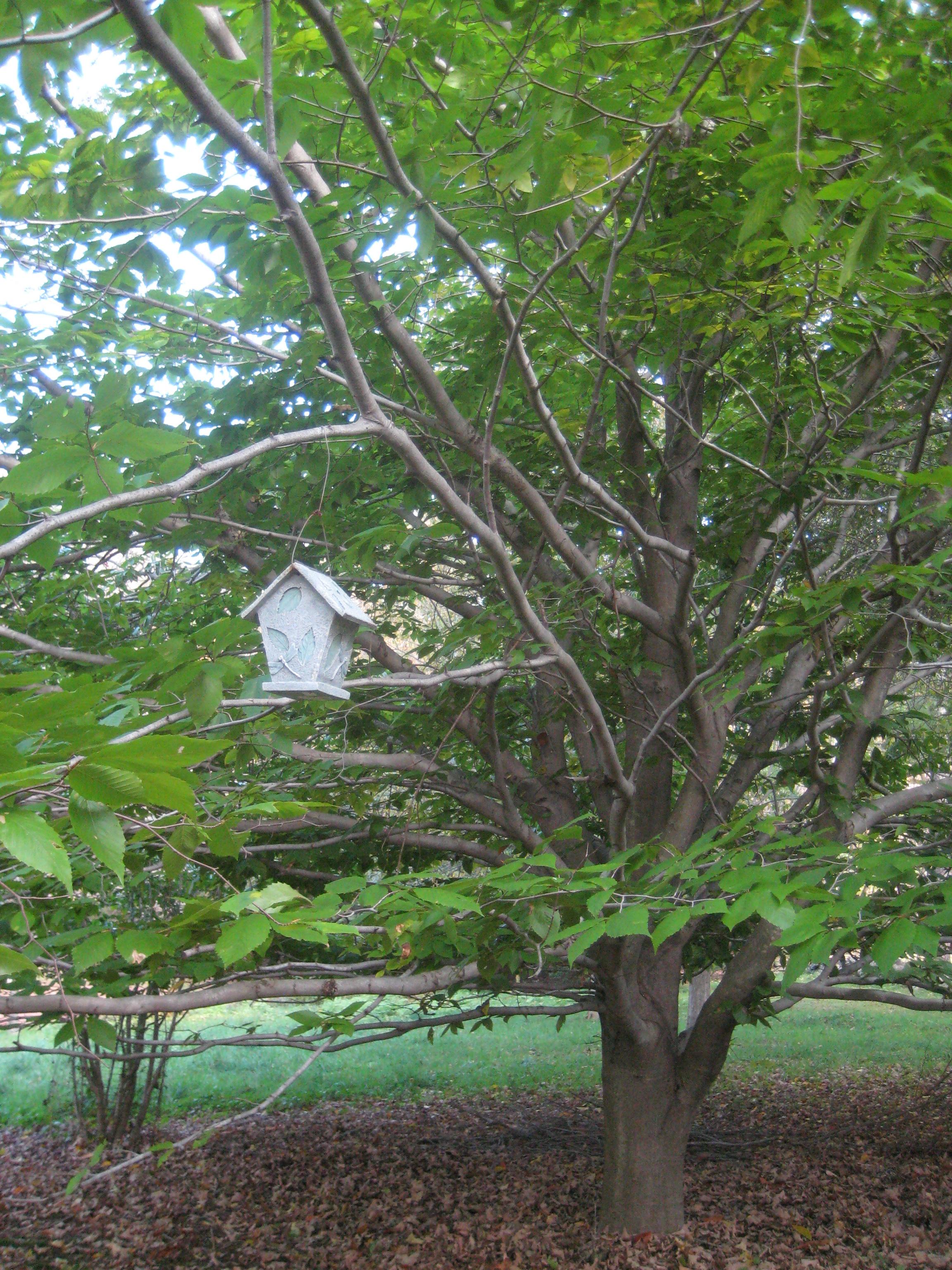 bird house 1.JPG
