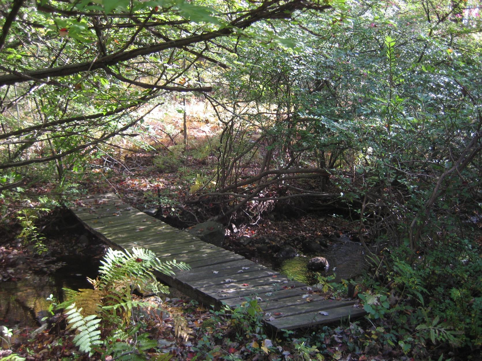 bridge by Jan tay's Pond 6.jpg