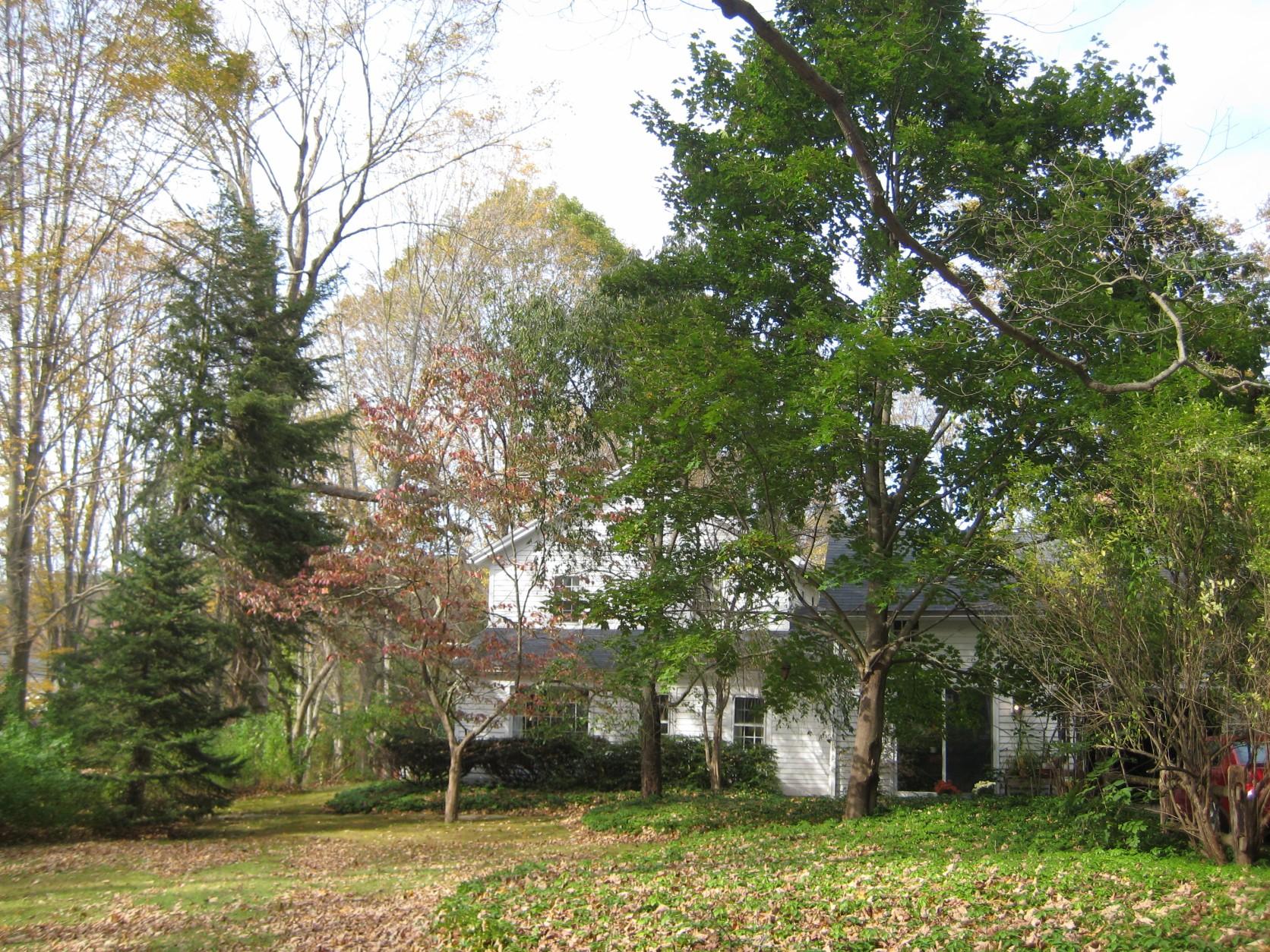 house 13.jpg