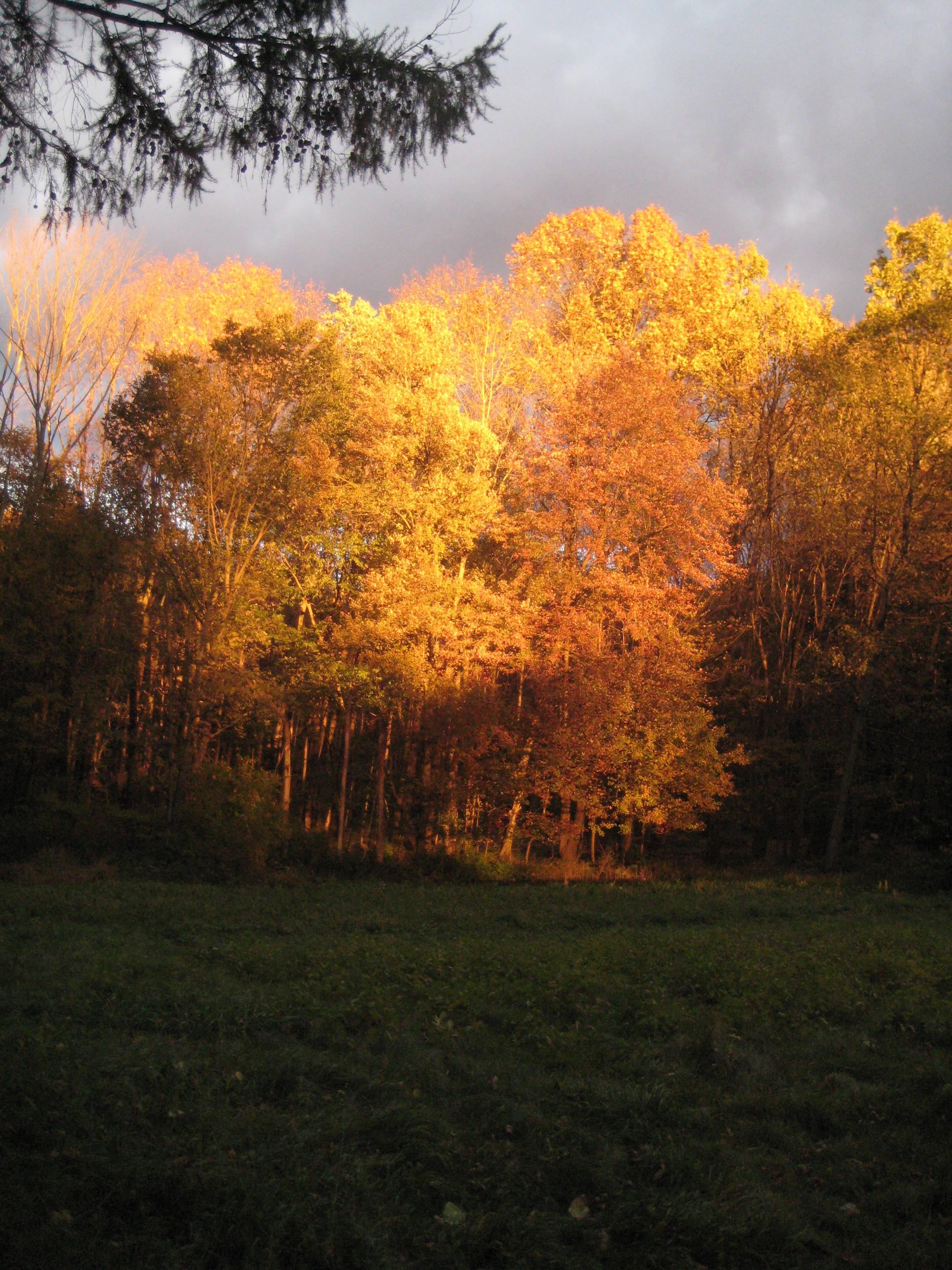 meddow @ sunset 2.JPG