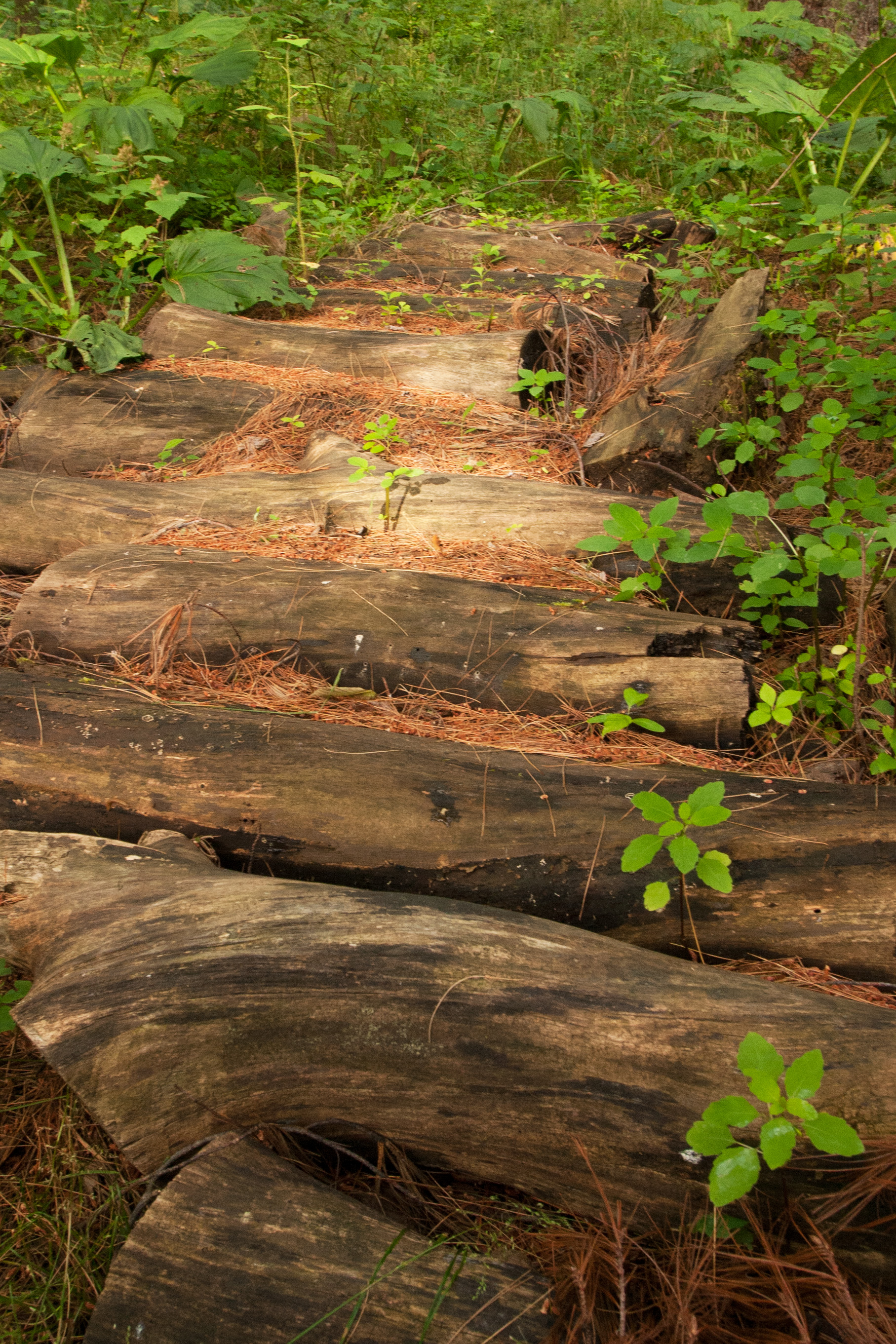 wood path_1.jpg
