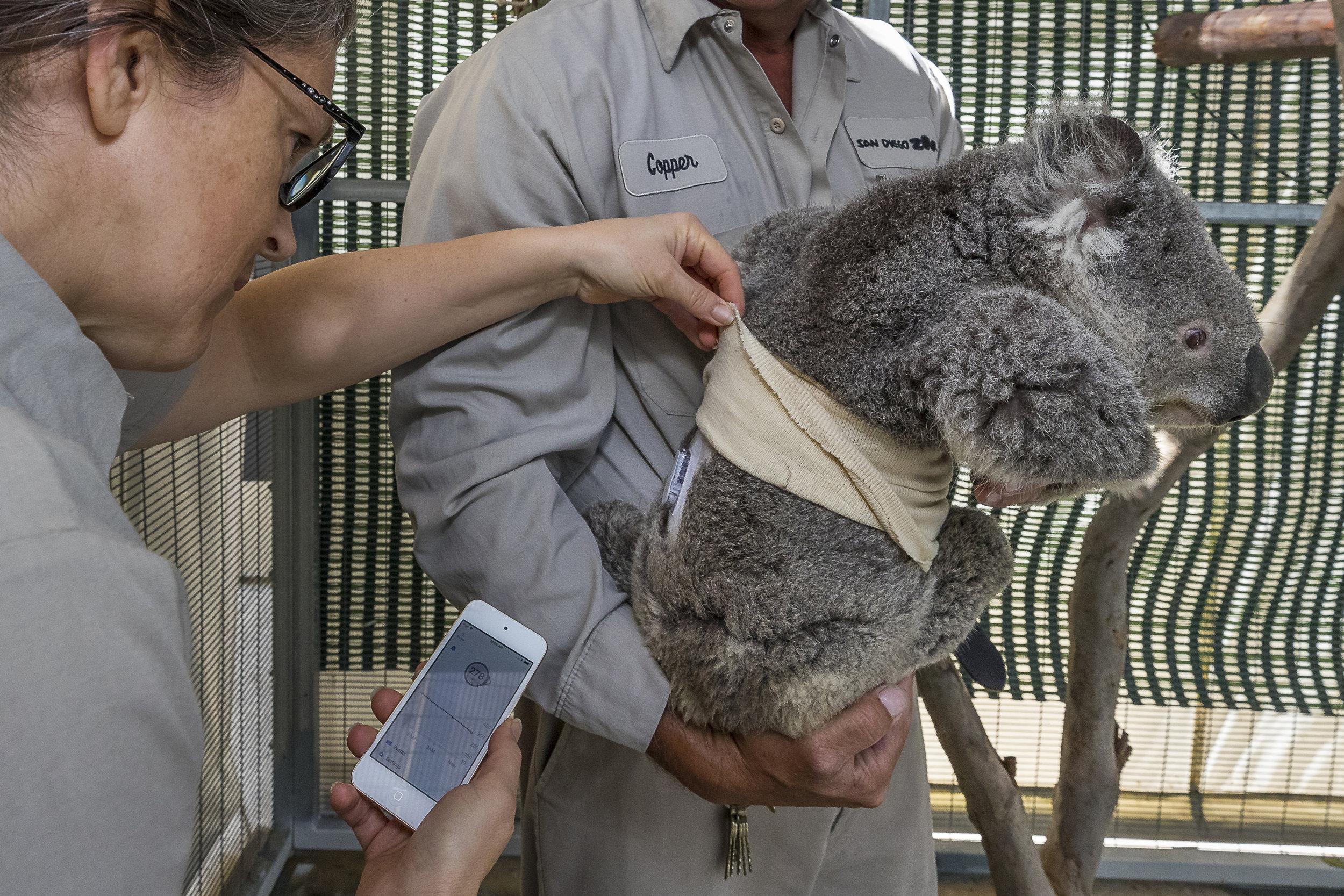 KoalaMonitor_004_LG.jpg