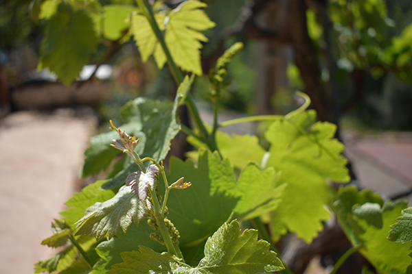 plants_closeup.jpg