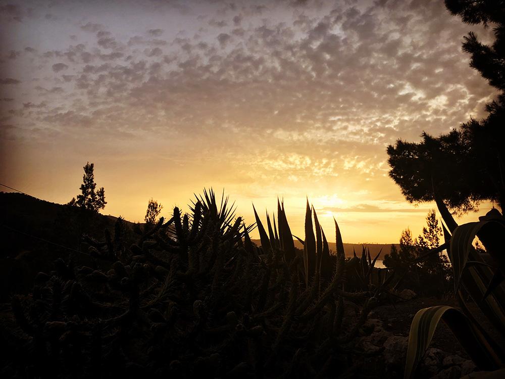 cactussunset.jpg