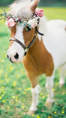 Who doesn't love a pony?! What a fairy tale come true!