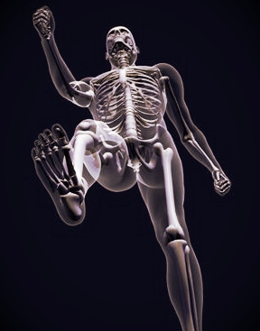 Bones are crucial as the scaffold to keep us upright but the origin of movement comes from the muscles alone.