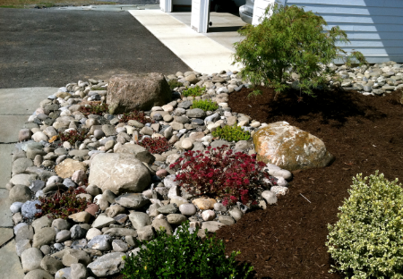 rock garden planted with sedum, thyme and boxwood in Cortland, NY.