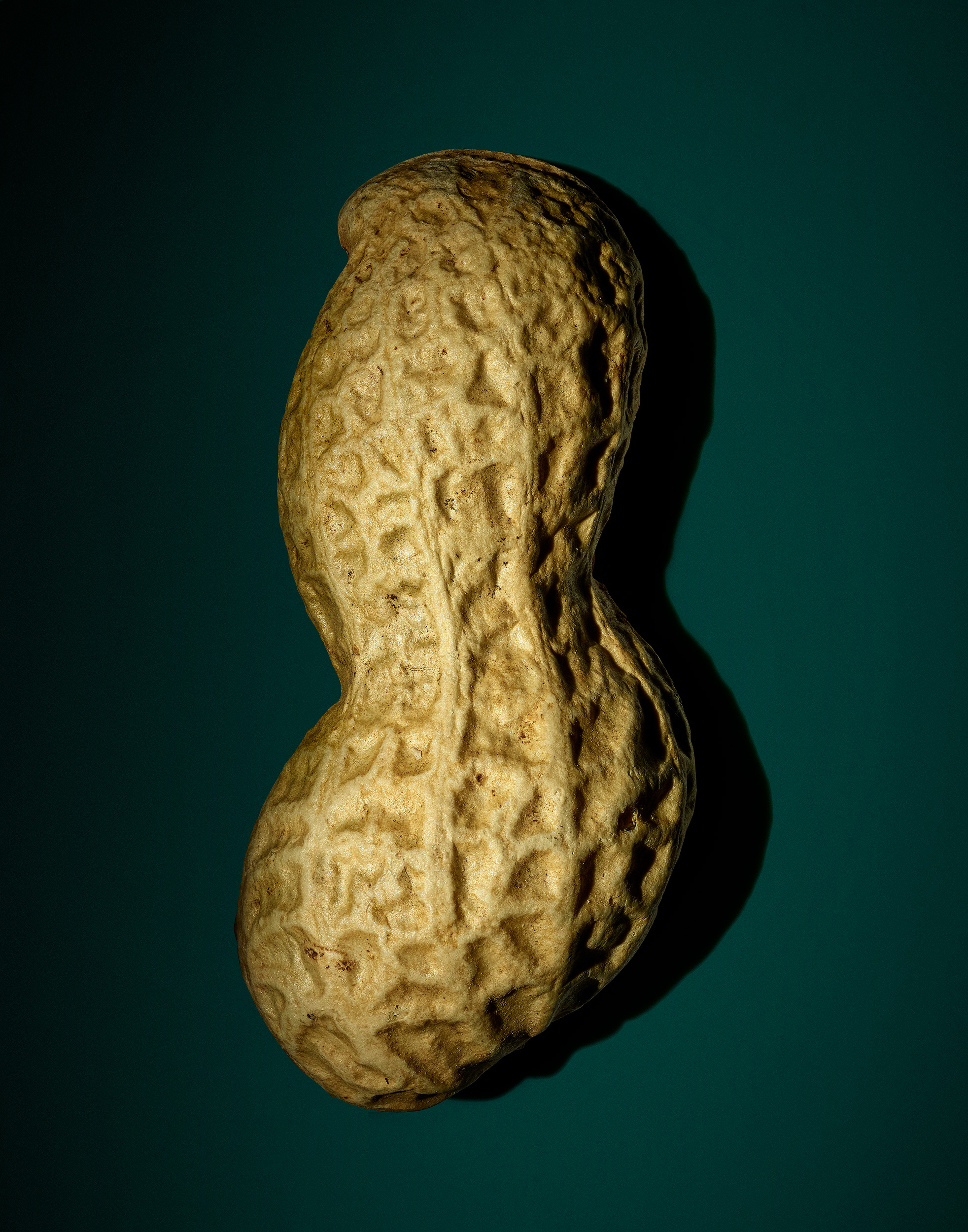 peanut01_v2-copy.jpg