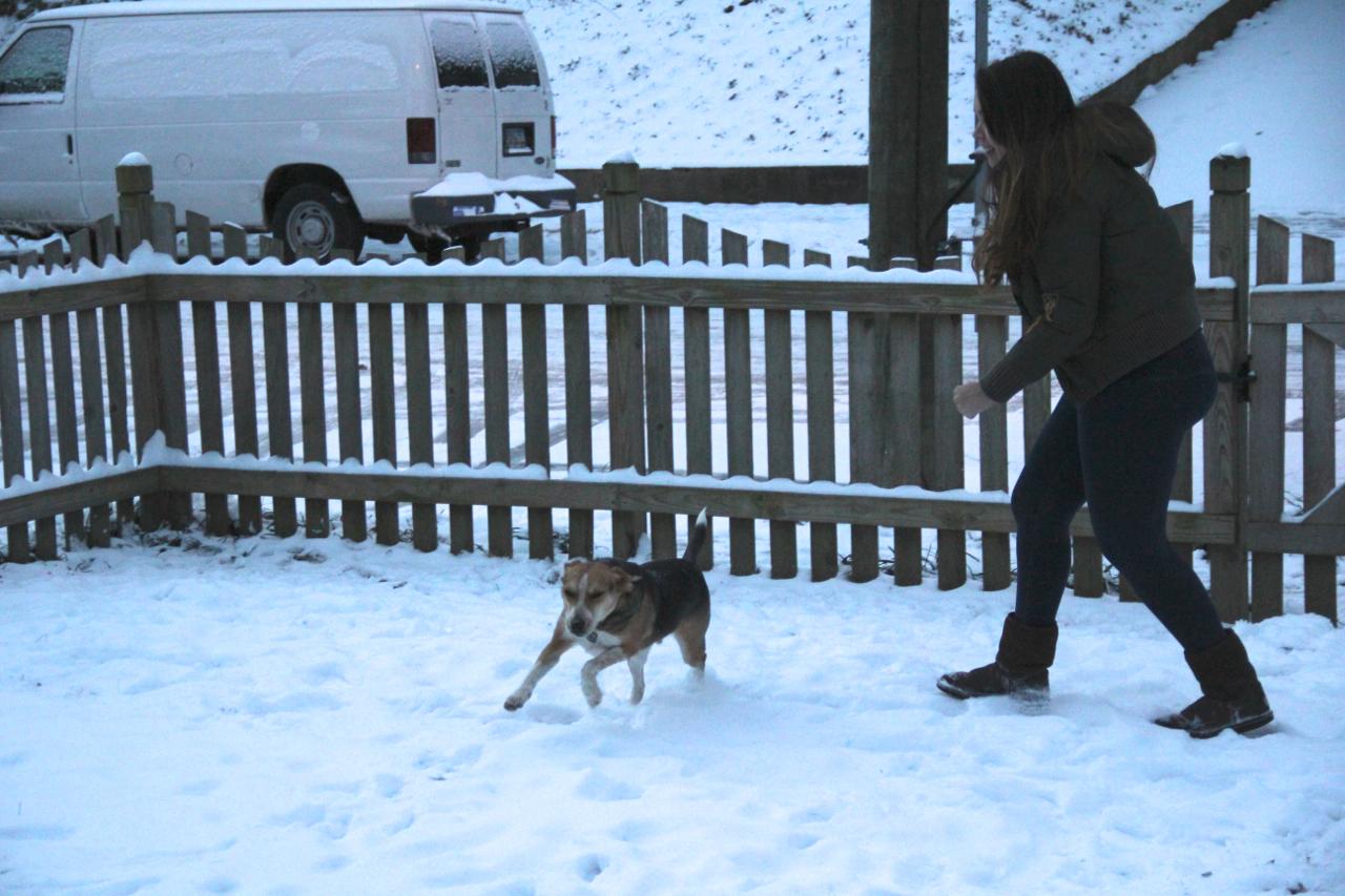 Chasing around the puppy