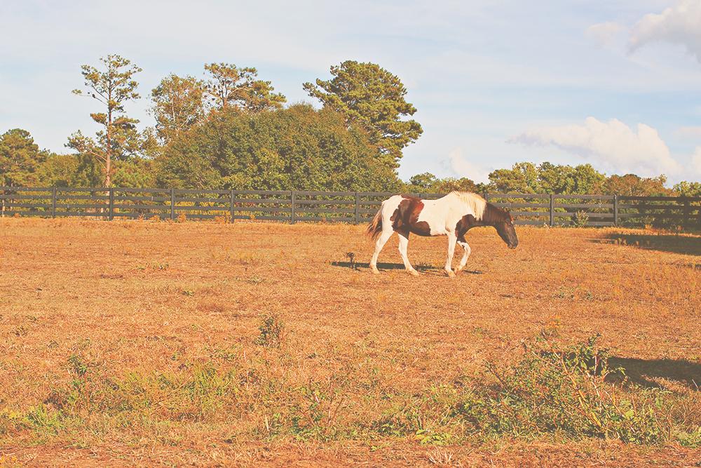 jotorrijos-horses-serenbe-asimplerdesign-2
