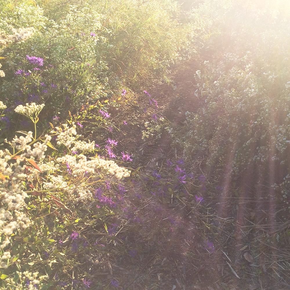 jotorrijos-jo-torrijos-asimplerdesign-atlanta-oakland-cemetery-flowers-nature-1.jpg