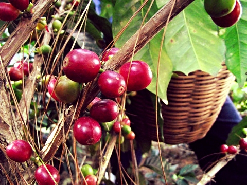 Single Origin Coffees