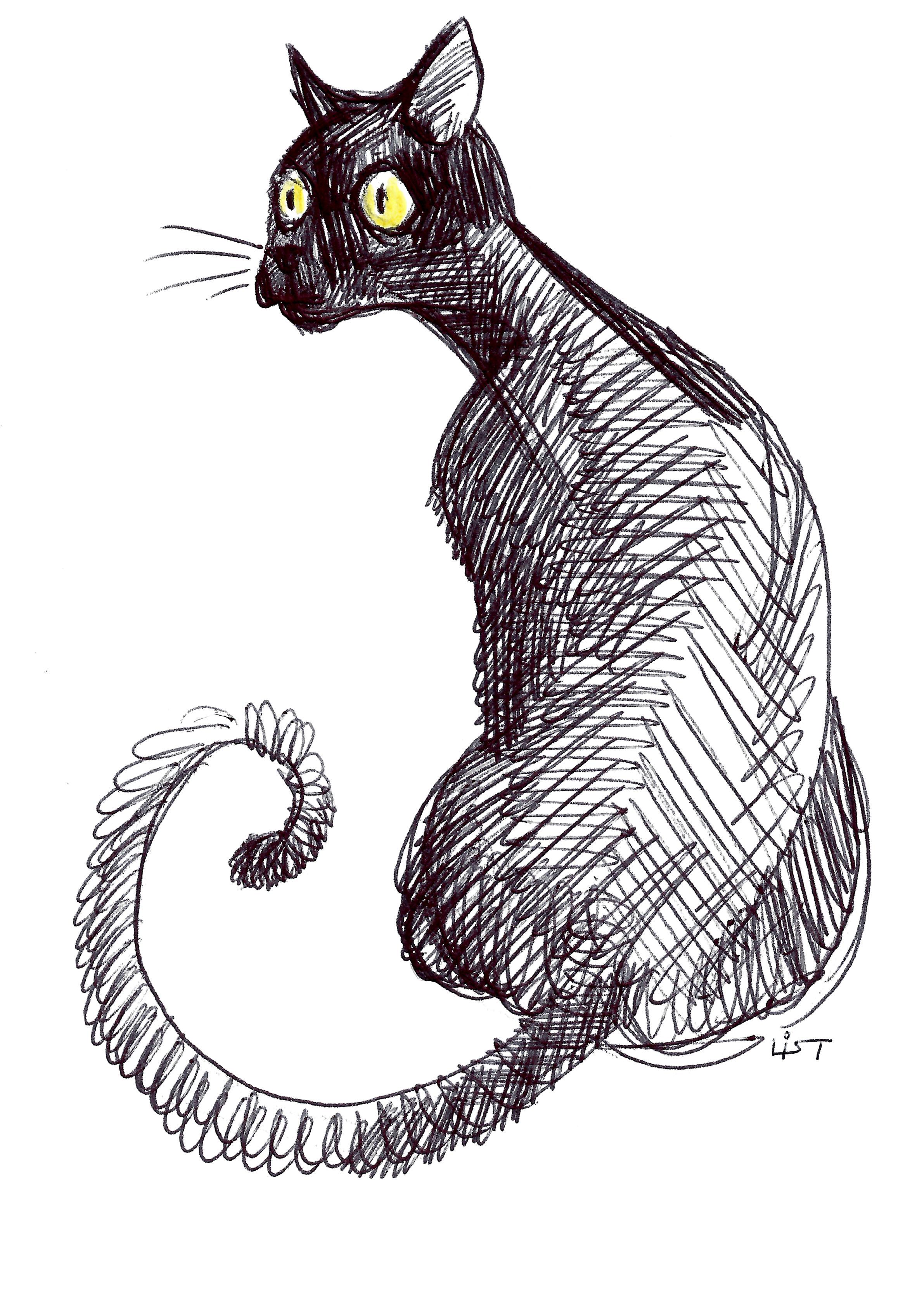 gatto_01.jpg