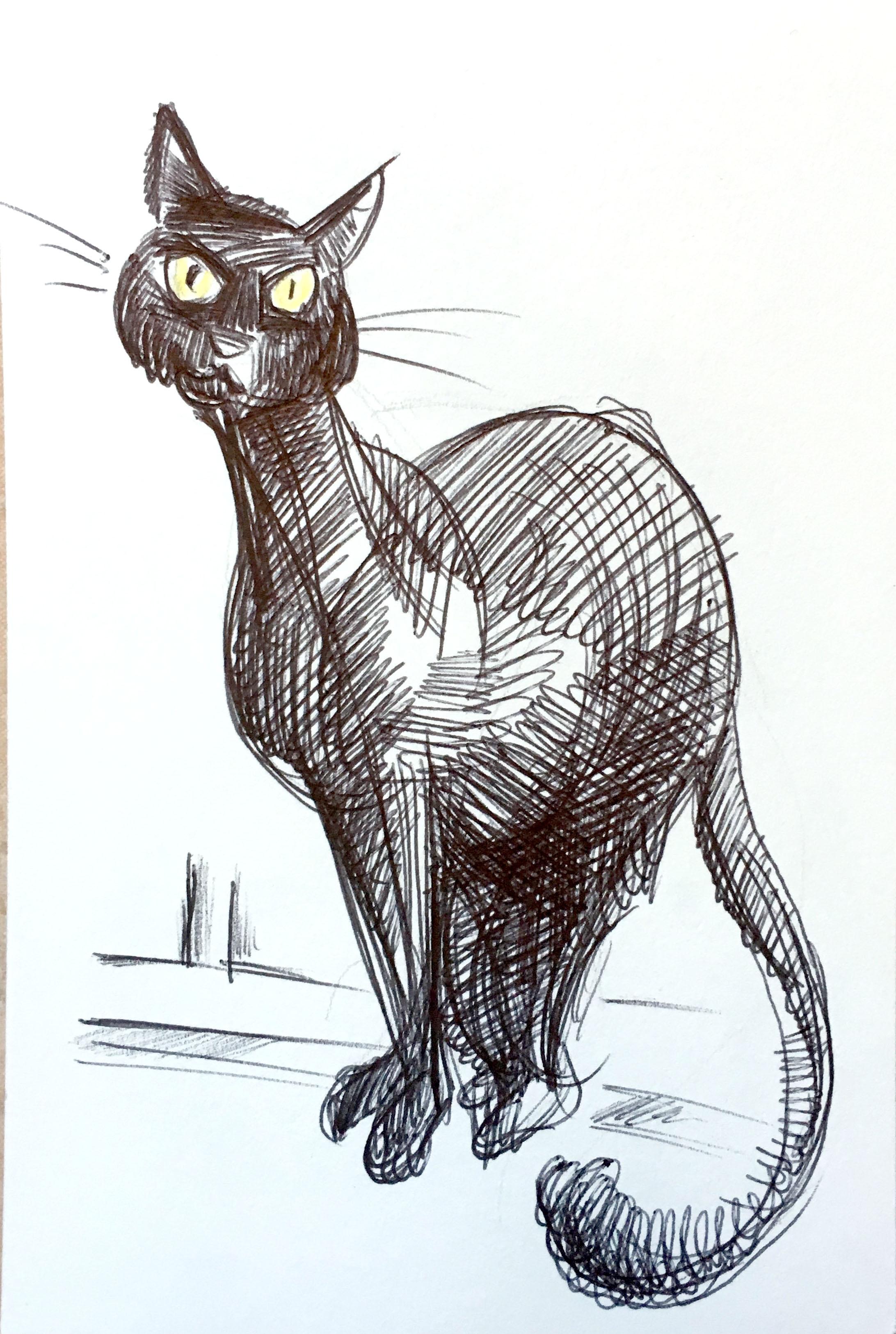 gatto_03.jpg