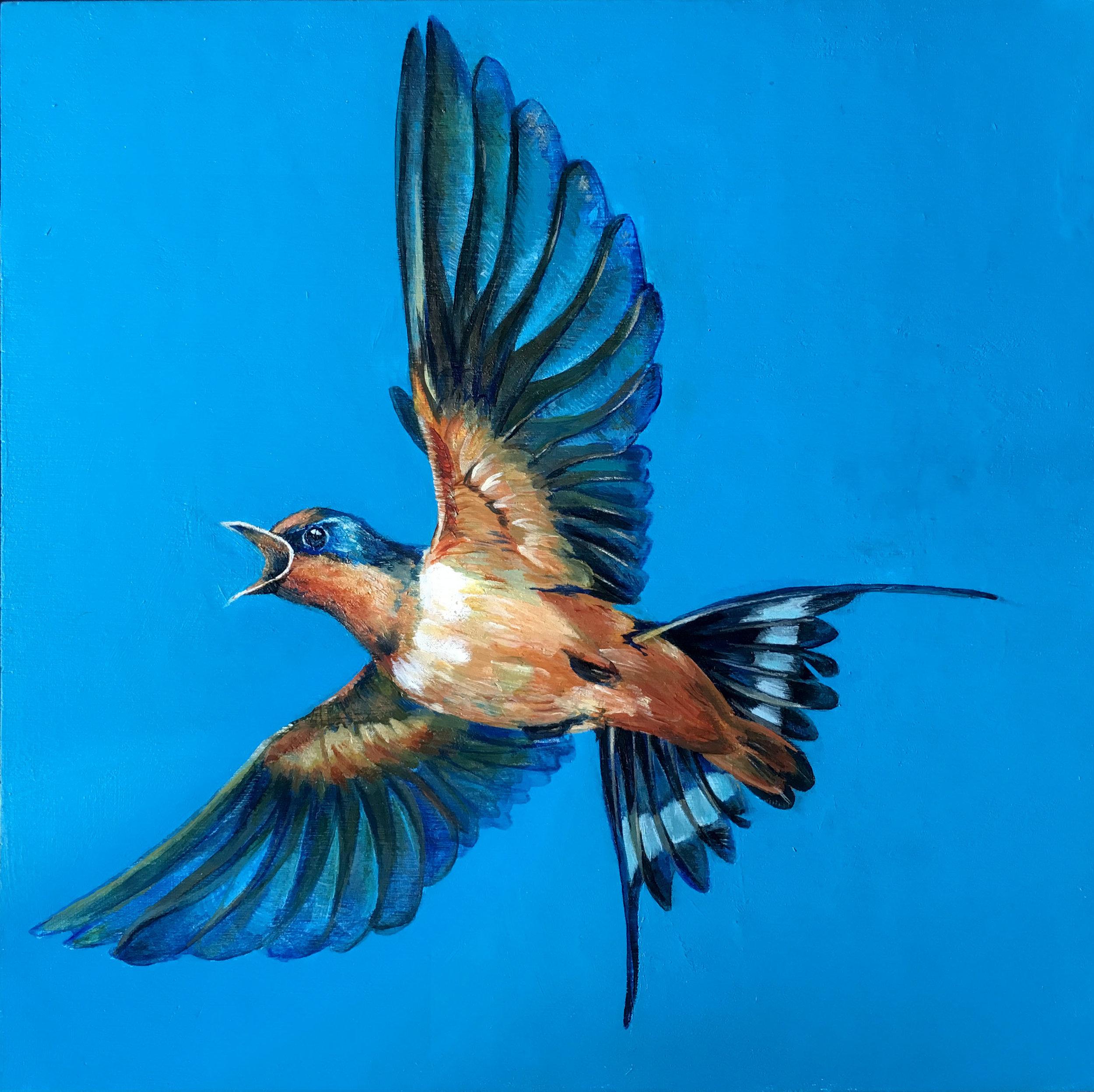 "Swallow - 10"" square acrylic"