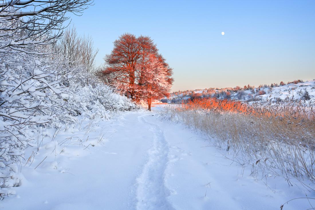 Vinter-1100 (2).jpg