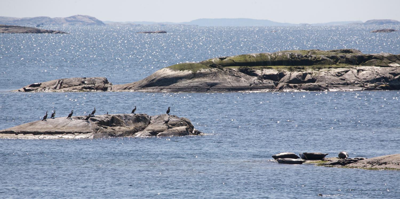 """Sekken"" - The fjord and sea border between Norway and Sweden. Photo ©: Lars-Ove Loo"