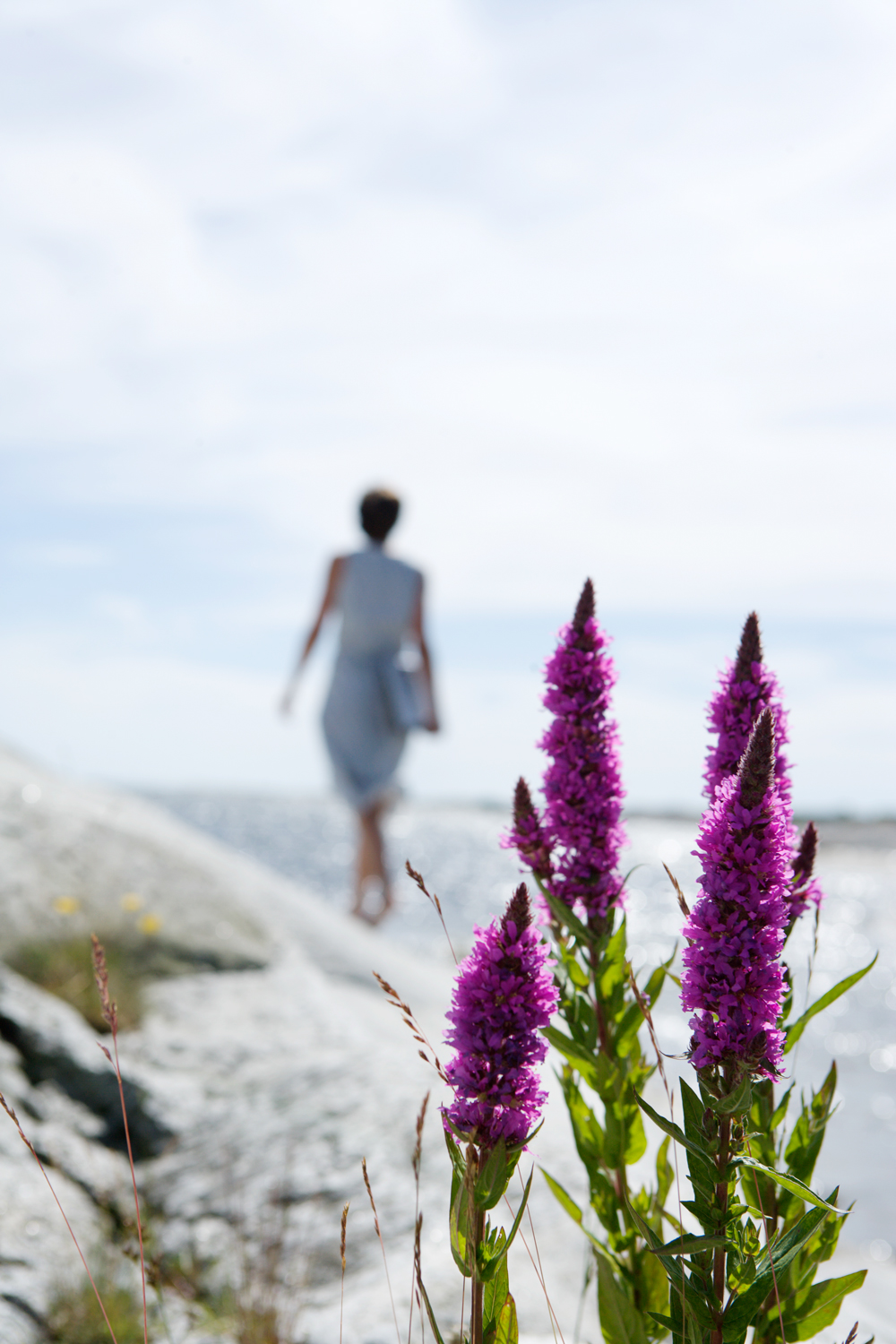 Early purple orchids grow in open meadows and pastures. Remember all orchids are protected - enjoy them where they are!