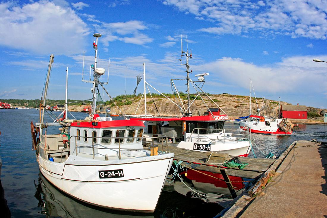 Fjordfisk.jpg