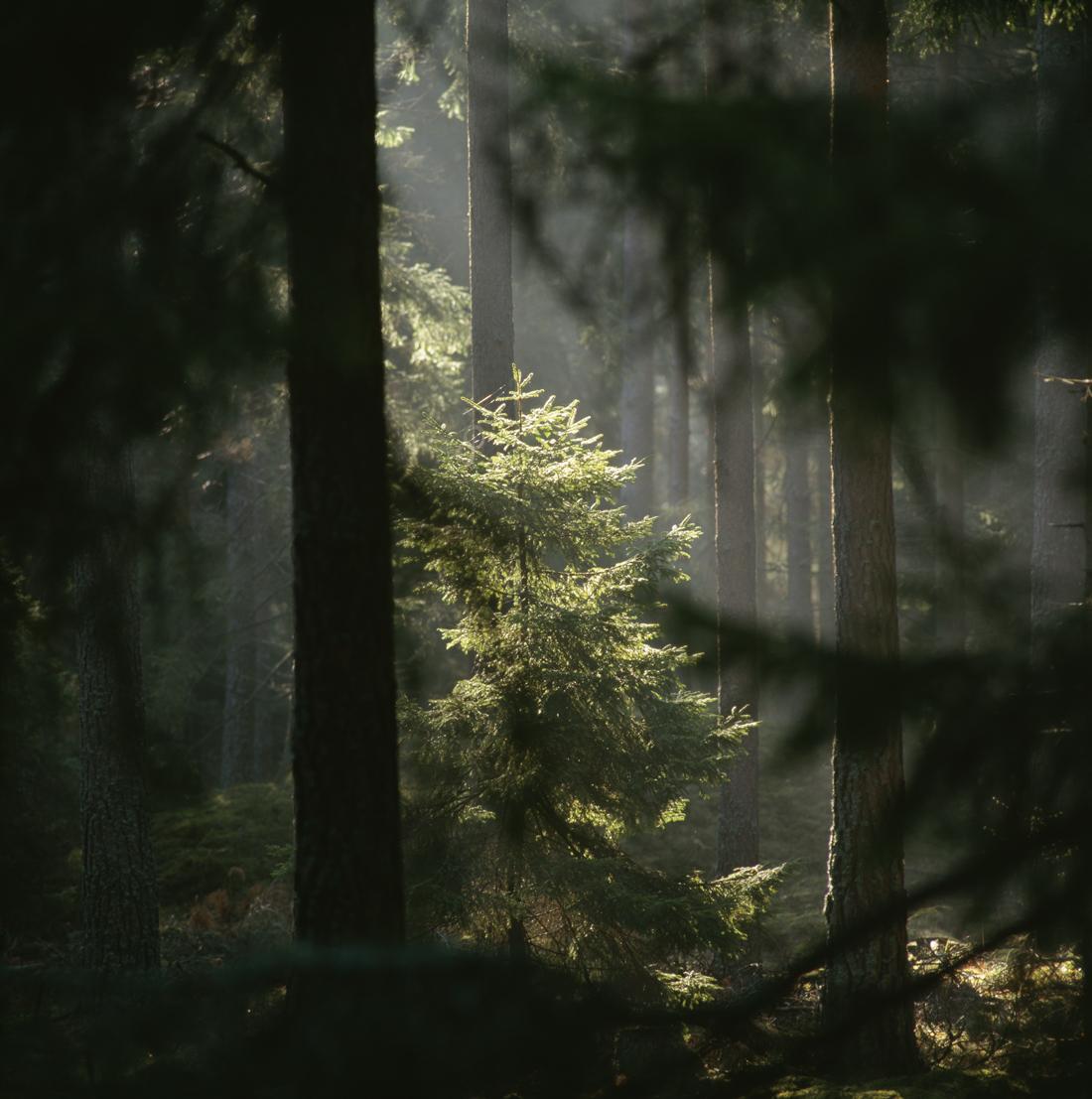 skogens-mystikk.jpg