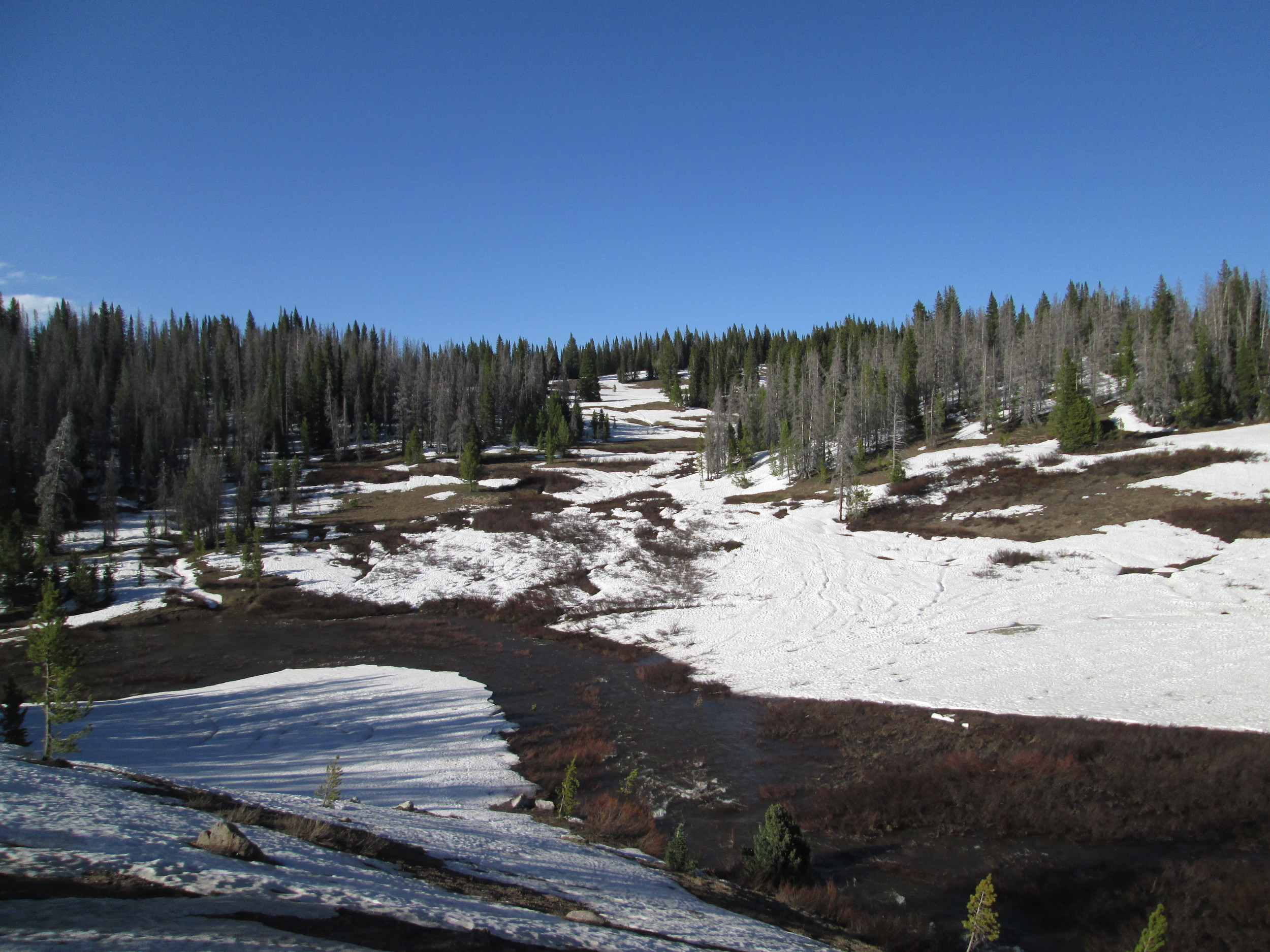 """The often-photographed (by CODOS) headwaters of Walton Creek displayed extensive loss of snowpack. Runnels are seen in the remaining snow, where very rapid snowmelt had produced downslope (versus vertical) """"preferred flow channels"""" for melt water, similar to eroded gullies. Suncupping is also apparent, as pockmarks in the snow surface caused by depressions above vertically oriented """"preferred flow paths"""" for melt water. Dust and reduced snow albedo enhanced both processes in this sunny, southwest-facing terrain."""