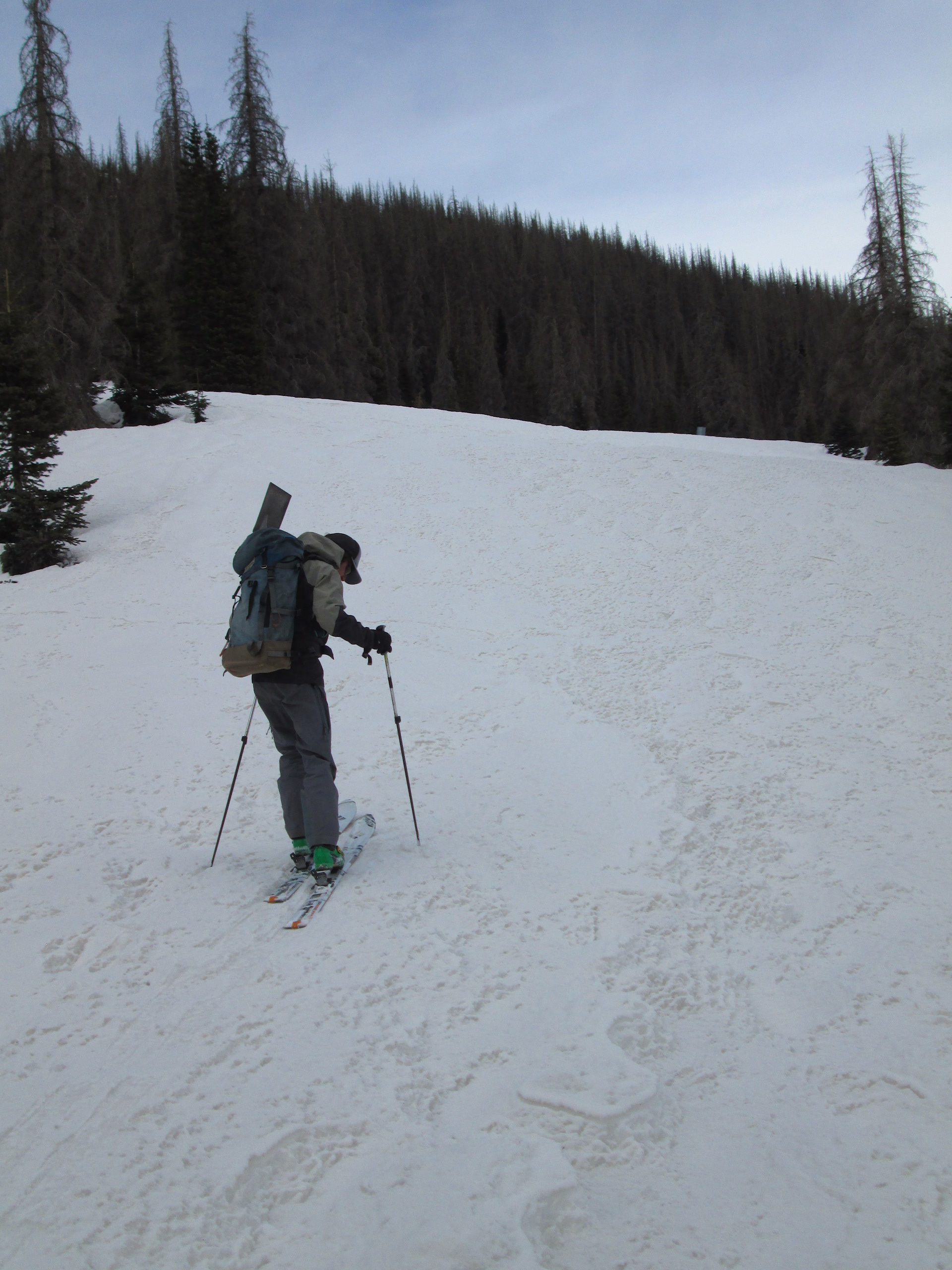 Dust layer D3-WY2015 was plainly visible under a trace of new snow, likely merged with layers D2 and D1. Additional dark flecks of debris from nearby beetle killed spruce trees were also observed, contributing to the darkening of the snow surface.