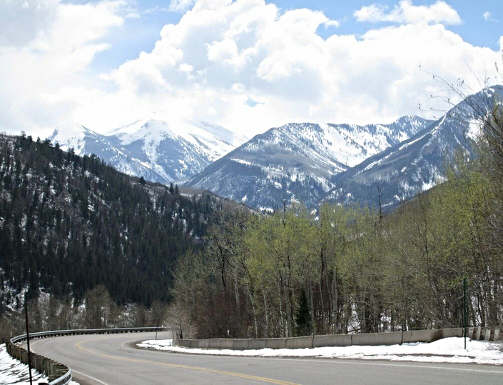 Aspen trees begin to leaf out at McClure Pass, on April 20, 2015.