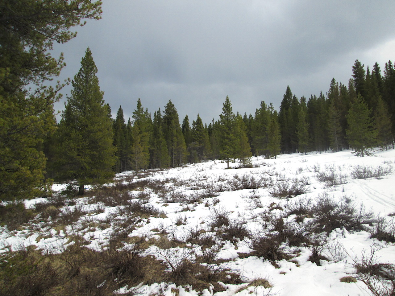 Bare ground, bushes, and patches of only the most recent snow were found in the lower end of the CODOS Park Cone site meadow, but snowcover improved at the upper end of the meadow, where CODOS snow profiles are performed.